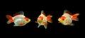 Three goldfishes Royalty Free Stock Photo