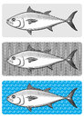Three graphic variations bluefin tuna Royalty Free Stock Images