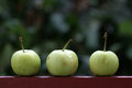 Three green apples picture of a Royalty Free Stock Image