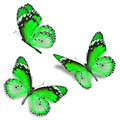 Three green butterfly Royalty Free Stock Photo
