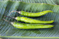Three green goat peppers on banana leaf Royalty Free Stock Image