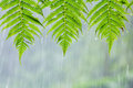 Three green leaves with water drop from rain Royalty Free Stock Photo