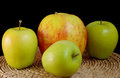 Three green and one big apples Royalty Free Stock Photo