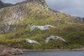 Three gulls in flight on coast Royalty Free Stock Photo