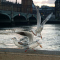 Three gulls at the thames Stock Image