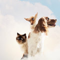 Three home pets next to each other on a light background funny collage Stock Images