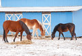 Three horses eating hay Stock Images