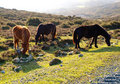 Three Horses In The Nature
