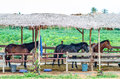 Three horses in a stable Royalty Free Stock Photo