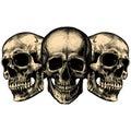Three human skulls Royalty Free Stock Photo