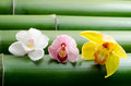 Three kinds of orchid on bamboo Stock Photo