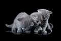 Three kittens Stock Images
