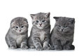 Three kittens Stock Photo