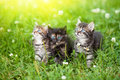 Three kittens cute in the meadow Stock Images
