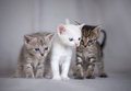 Three kittens fun cute together Stock Image