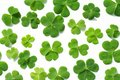 Three leaf clovers on white shamrock isolated background Stock Photo