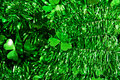 Three leaved clover Royalty Free Stock Photo