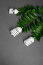Three LED lamp with green leaf, ECO energy concept, close up. Light bulb on grey background. Saving  and Ecological Environment. C Royalty Free Stock Photo