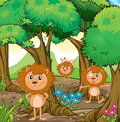 Three lions inside the forest illustration of Royalty Free Stock Photography