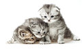 Three little kitten Royalty Free Stock Images