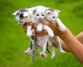 Three little kittens in hands Royalty Free Stock Photos