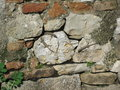 Three lizards small bask on a stone wall in the midday sun Royalty Free Stock Image