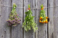 Three medical herbs bunch on old wooden wall farm Stock Images