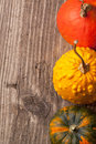 Three mini pumpkins Royalty Free Stock Photo