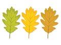 Three multi-colored oak leaf