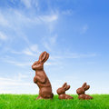 Three nice chocolate easter bunnies on a fresh meadow Royalty Free Stock Photos