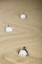 Three Old Pocket Watches, Vert...