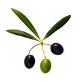 Three olives and three leaves Stock Images