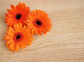 Three orange gerberas on wood with copyspace Stock Photos