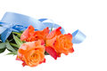 Three orange roses with blue ribbon isolated on white background Royalty Free Stock Image