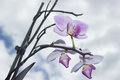 Three orchids and sky Royalty Free Stock Photo