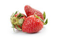 Three organic garden strawberries isolated on white Royalty Free Stock Photo
