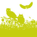 Three owls Royalty Free Stock Photo