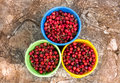 Three pails full of cherries. Royalty Free Stock Photo
