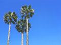 Three Palm Trees Against Blue Sky. Vintage post processed. Fashion, travel, summer, vacation and tropical beach concept. Royalty Free Stock Photo