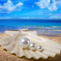 Three pearls in shell Stock Photos