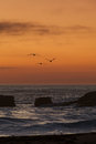 Three pelicans in sunset Royalty Free Stock Photo