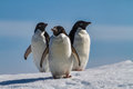 Three penguins on snow antarctica closeup close up of adelie a sunny day at devil island Royalty Free Stock Image