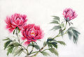 Three peonies watercolor painting of pink asian style Royalty Free Stock Images