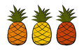 Three pineapple in different colors Stock Photos