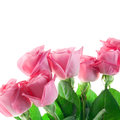 Three pink roses isolated on white bouguet of background Stock Photo
