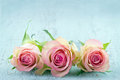Three pink roses on light blue wooden shabby chic background with copy space Stock Photography