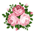 Three pink roses. Vector illustration. Royalty Free Stock Photos