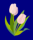 Three pink tulips on blue