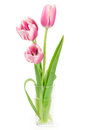 Three pink tulips in a vase Stock Images