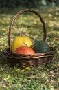 Three pumpkins in wicker basket, yellow spaghetti pumpkin, green muscat pumpkin and orange hokkaido pumpkin, autumn leaves Royalty Free Stock Photo